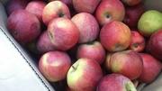 Яблоко свежее из Беларуси