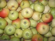 Яблоки съёмные